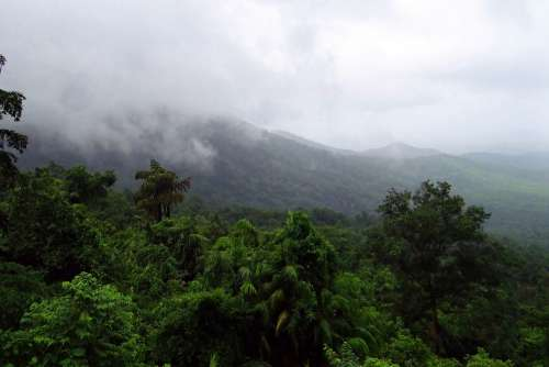 Rainforest Mollem National Park Western Ghats
