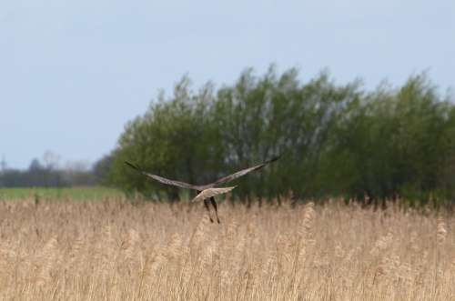 Raptor Bird Of Prey Wing Bird