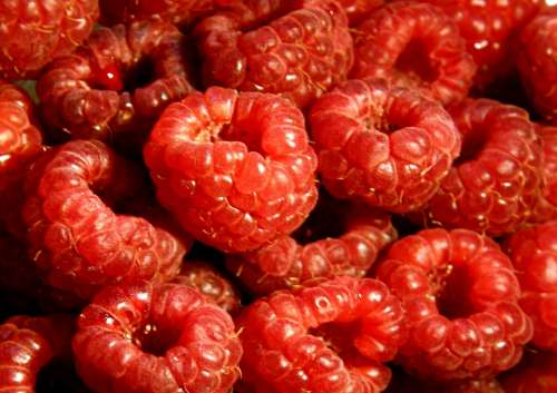 Raspberry Fruit Pie Raspberry Cake Fruits