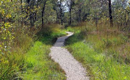 Recovery Leisure Away Path Promenade Trail Nature