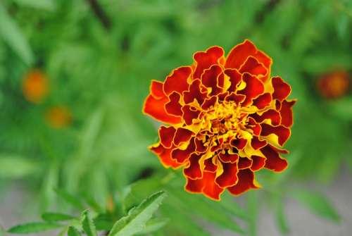 Red Flower Yellow Flower Orange Flower Fire Flower