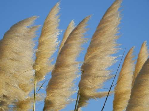 Reed Horsetail Plant Bank Water Sky Landscape