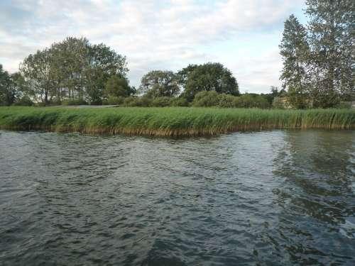 Reed Riverside Bank Lake Lakeside Nature Water