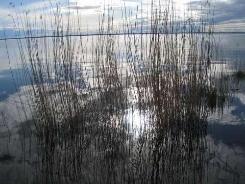Reed Water Sky Blue Spring Lake Cloud