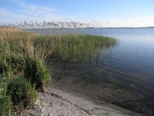 Reed Landscape Lake Sandy Shore Island Of Usedom