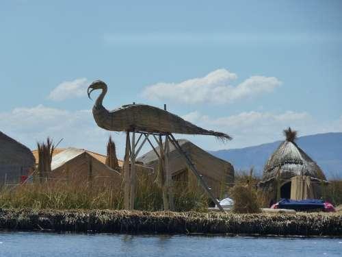 Reed Totoraschilf Reed Island Rush Lake Titicaca