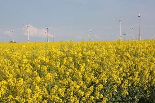 Renewable Energy Green Energy Oilseed Rape