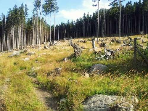 Resin Nature Hike Hiking
