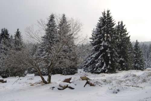 Resin Torfhaus Winter Snow Wintry