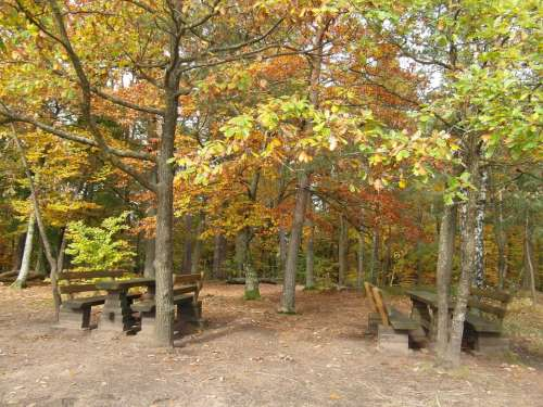 Resting Place Forest Autumn Emerge View Palatinate