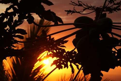 Reunion Island Sunset Evening Inflamed Sun Ocean