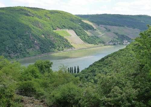Rhine Bank River Wine Terraces Germany