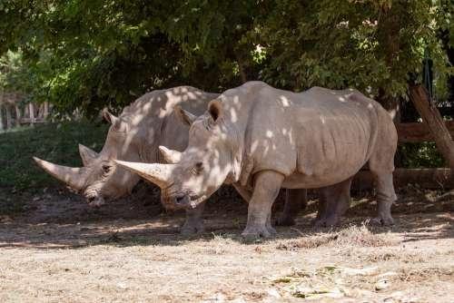 Rhino Animal Nature Park Zoo