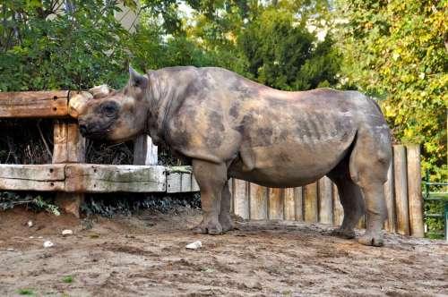 Rhino Zoo Mammals