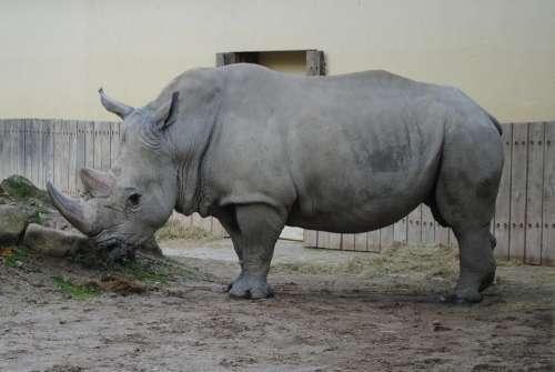 Rhino Wild Animal World Big Game Zoo