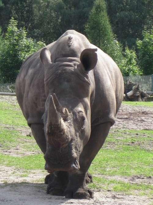 Rhino Animal Zoo