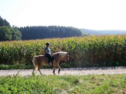 Ride Summer Girl Horse