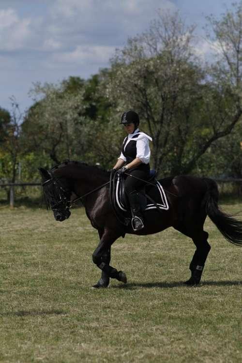 Ride Equestrian Dressage Woman Horse Sport