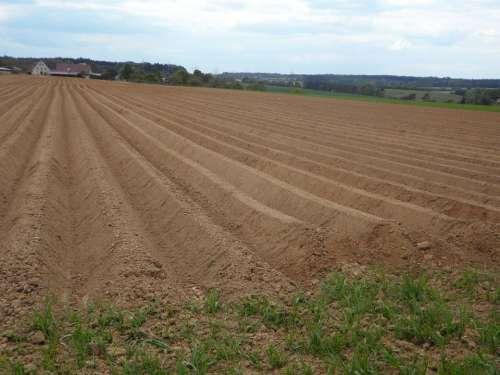 Ridge Arable Ackerfurchen Earth Cultivation