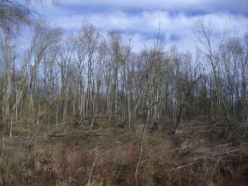 Riparian Zone Book Storm Damage Sky Blue Clouds