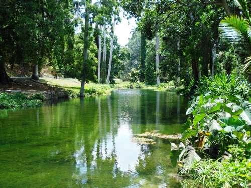 River Idyll Landscape Tree Idyllic