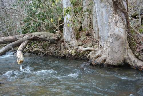 River Tree Root Outside Landscape Nature Water