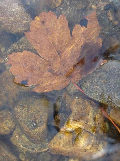 River Water Sheet Wet Nature