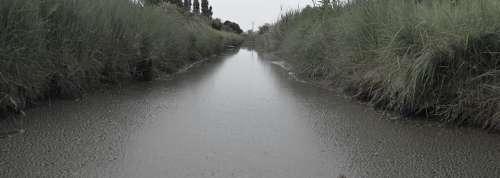 River Reeds Mud Sad Rain Grey Grisaille