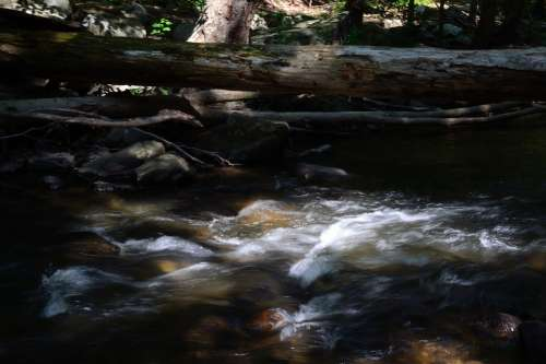 River Stream Nature Log Woods Water Flowing