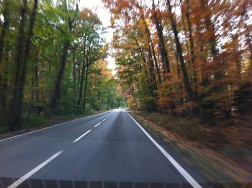 Road Autumn Speed Roadway Driving A Car Drive
