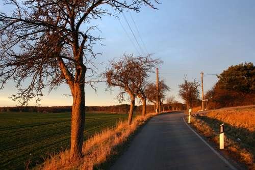Road Tree Field Landscape Trees Away Nature