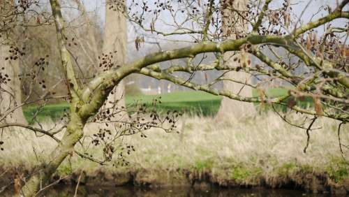 Branch Tree Nature Individually Still Life