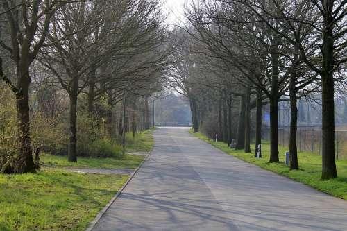 Road Avenue Trees Tree Mood