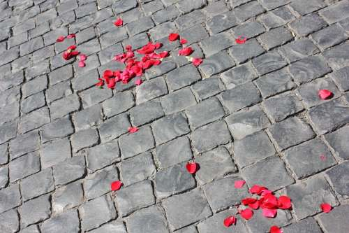 Road Paved Petals Of Roses Texture Background