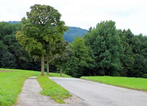 Road Avenue Trees Away Asphalt Nature Forest