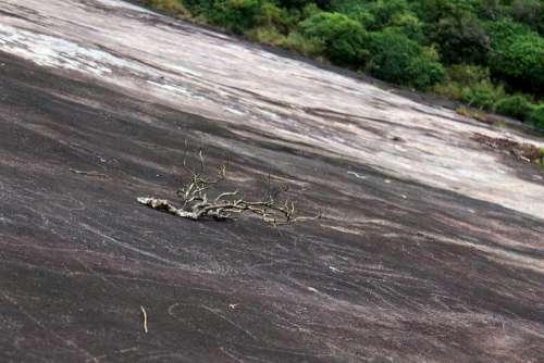Rock Branch Landscape Nature