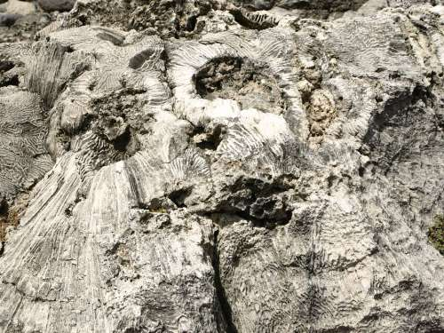 Rock Coral Nature Barren Close Up Macro Caribbean