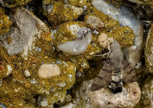 Rock Moss Hummingbird Butterfly Nature Beautiful