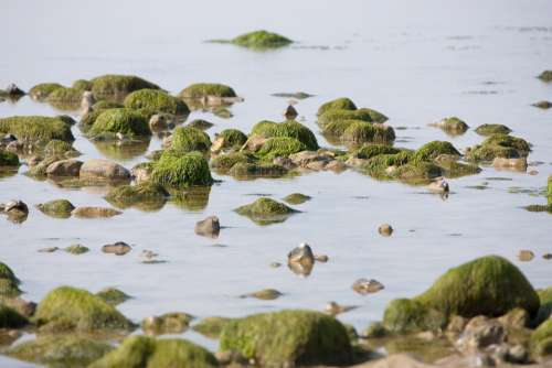 Rock Pool Rocks Pool Seaweed Seaside Coast Beach