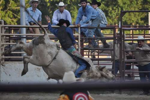 Rodeo Ranch Bucking Cowboy Western Texas Rope