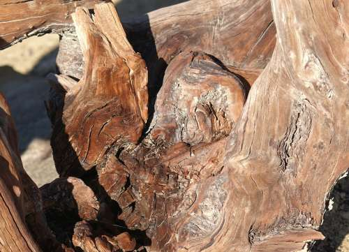 Root Wood Old Gnarled