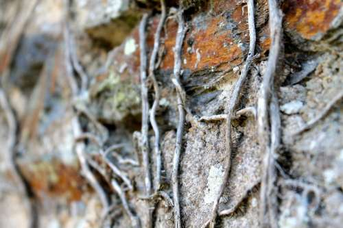 Roots Nature Wall