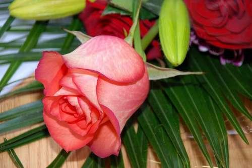 Rose Flower Roses Flowers Pink Pink Rose Summer