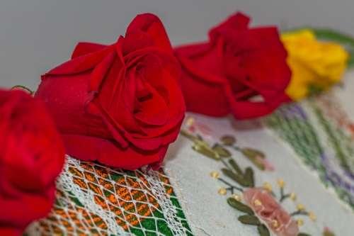 Rose Red Rose Flower Decoration