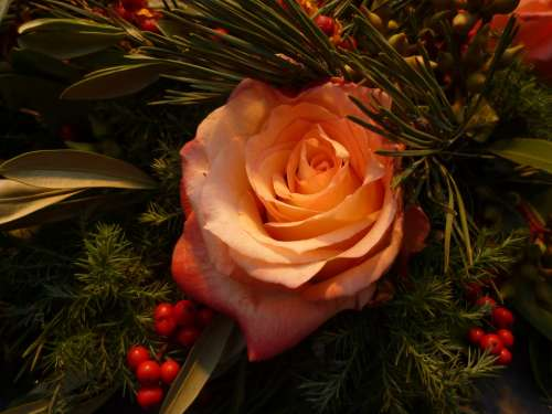 Rose Christmas Bouquets Plant Romantic Rose Bloom