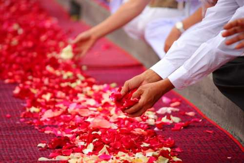 Rose Petals Buddhism People Thailand Floor