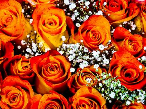 Roses Orange Bouquet Bunch Of Flowers Nature