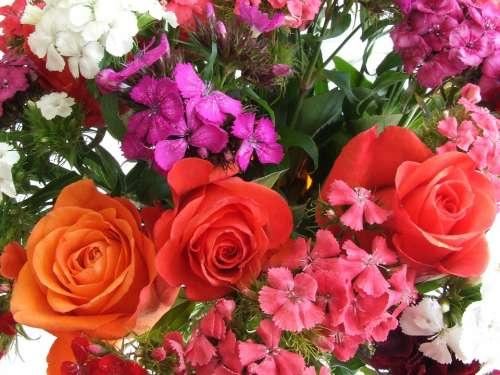 Roses Flowers Orange Roses Bouquet