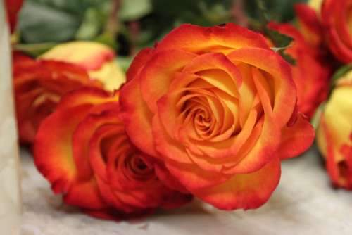 Roses Orange Yellow Beautiful Blossom Colorful