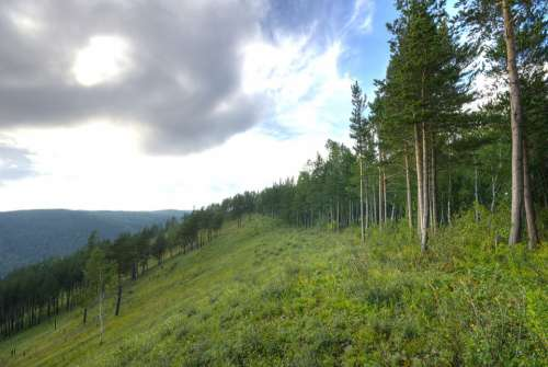 Russia Mountains Hills Landscape Forest Trees